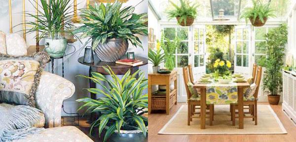 Растенията, които отглеждаме у дома, не просто красят интериора. Те са много полезни и за здравето, защото пречистват въздуха и го овлажняват