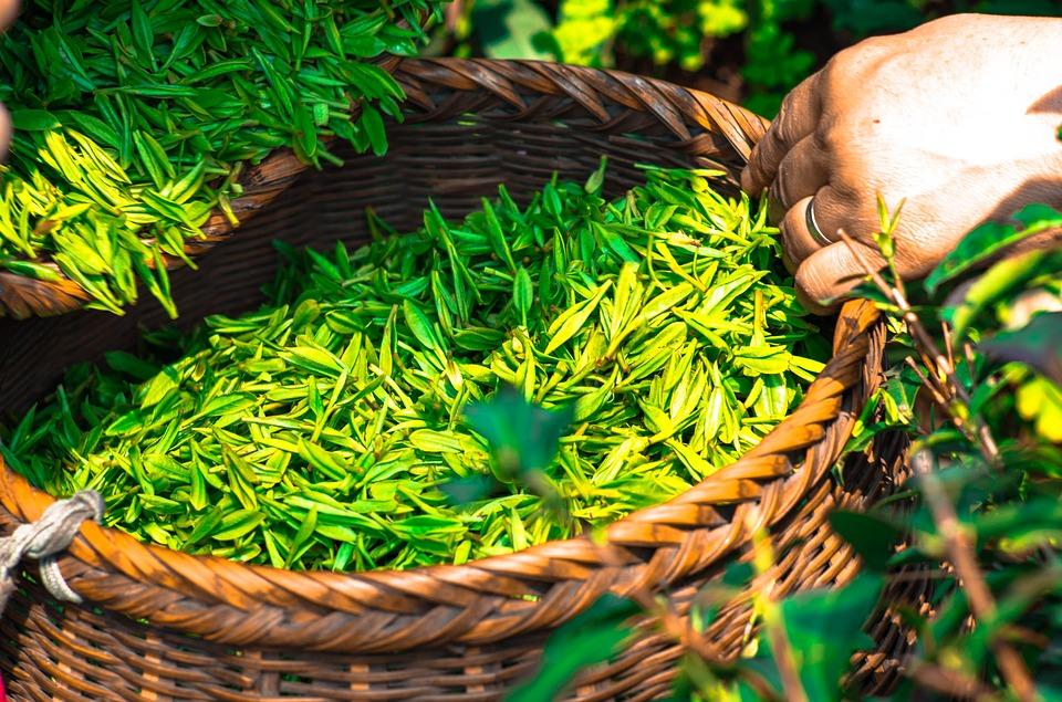 Как е най-правилно да се запари чай, така че тази изключително ценна напитка да не загуби здравословните си ползи? Учените дават авторитетен отговор на този въпрос