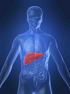 human-liver-small