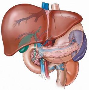 Боли ли ли черния дроб, или болката идва само от жлъчката?