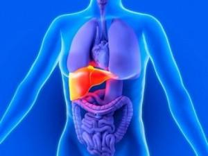 лечение на черен дроб