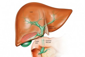 черен дроб нов